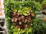 花卉租摆 植物租赁