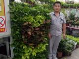绿植租摆公司北京花卉租摆