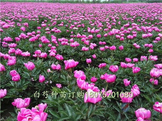 IMG_20170503_134936