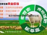 育肥羊饲料,羊饲料添加剂