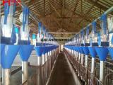 迈宏供应猪用自动供料系统,料线,限位栏等养猪场专用养殖设备