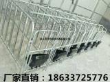 养猪设备母猪定位栏 猪用单体栏镀锌管焊接 饲喂设备