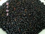 扁竹种籽批发  扁竹育苗基地大量供货