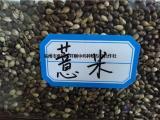 新薏米种籽批发  薏米种植技术免费指导电话