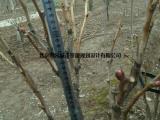园林花架|创园景观|园林花架植物