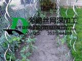 植物螺旋支架