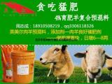 育肥羊怎么喂出栏快 育肥羊怎么喂长的快