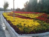 盛诺花卉幼苗 常年提供园林植物 花海设计 园林工程建设