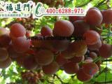 葡萄用了福进门高钾型水溶肥,实现高产