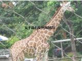 动物园围护网¥动物园狮虎园区隔离网¥大型猛兽防护隔离栅