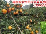 现在可以开始种茂谷柑苗了,想要栽茂谷柑苗的趁早订购