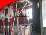 粥料养猪料线 液态料线 自动环保液态饲喂器