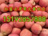 红富士苹果产地批发