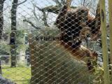 动物园围网价格¥动物园养殖护栏¥野生养殖区防护围护网