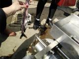 鱼肉去刺机,去鱼刺设备,鱼骨鱼刺分离机