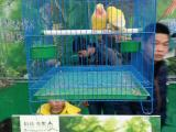 百鸟展览出租正规百鸟园巡展租赁百鸟主题方案报价