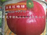 供应改良红地球洋葱种子 红皮洋葱种子 圆葱种子