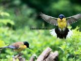 百鸟展出租价格百鸟园巡展报价单百鸟主题展览租赁