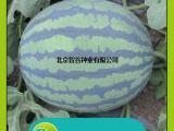 智谷甜王西瓜种子