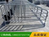 大型猪场必备母猪定位栏 限位栏食槽 养猪料槽 猪围栏厂家