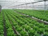 标准化无土栽培设备,水培设备