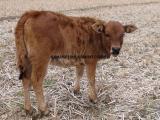 小牛养殖饲料添加剂哪种更好