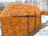 5*7圈玉米铁丝网 圈玉米荷兰网 浸塑铁丝荷兰网