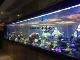 创意海洋展整套方案提供正规海洋动物表演租赁