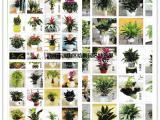武汉盆栽植物租摆办公室上门养护别墅家庭花草树木造景绿植租赁