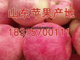 2017年红富士苹果行情红富士苹果产地价格