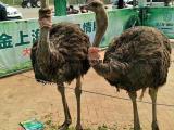 百鸟展资源出租提供各种鸟类珍禽展览百鸟园巡展租赁