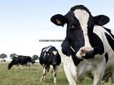 奶牛饲料价格 优质奶牛饲料厂家