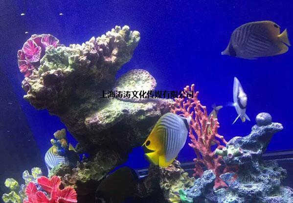 海洋展资源出租报价正规海洋馆活体生物展览方案租赁