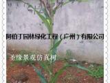 仿真水果树 出口_工艺品仿真玉米树_大型仿真玉米树