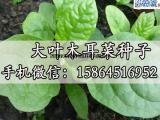 木耳菜种子 藤菜 蔬菜种子