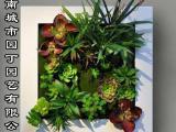 夏季垂直绿化河南垂直绿植墙制作-城市园丁