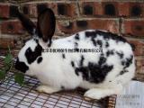 养兔子用的饲料 养兔子的饲料哪家好