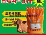 圈养牛饲料配方 圈养牛饲料专用配方