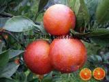 大量塔罗科血橙出售