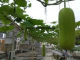 兰天兴农标准化无土栽培设备,水培设备