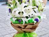 武汉绿植盆栽粉掌粉冠军,园艺礼品花卉水培粉掌室内植物