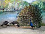 百鸟展珍禽养殖出租价格百鸟园珍惜鸟类展览方案租赁