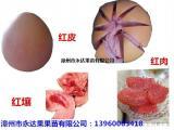 重庆人购买三红蜜柚苗价格多少?优质三红蜜柚苗批发价格