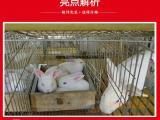 AAAA级兔笼生产厂家尽在鑫德兴养殖笼具厂