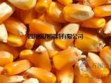 四川 饲料厂常年收购小麦、玉米等原料