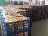 当季砂糖橘子水果招商大量批发产地直销