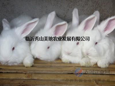长毛兔人工授精事项/长毛兔人工授精技术