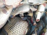 鱼池鱼塘专用诱捕充气抬网直销批发价格合理