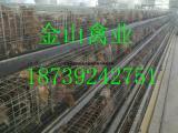 青年鸡鸡场