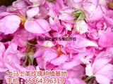 大马士革玫瑰鲜花批发种植报价 鲜花采购报价